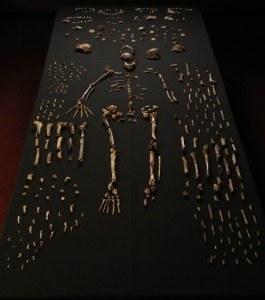 Ossements Homo Naledi