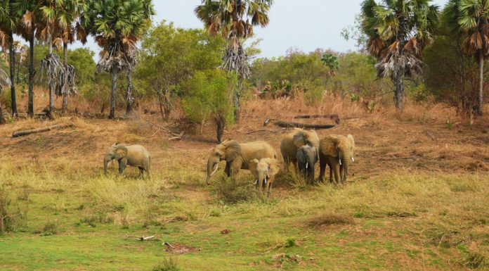 Réserve naturelle W-Arly-Pendjari - Afrique de l'ouest - Bénin, Burkina Faso et Niger