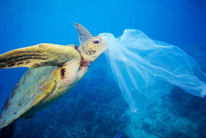 tortue et pollution plastique