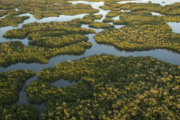 Parc national des Everglades - Floride - Etats-Unis