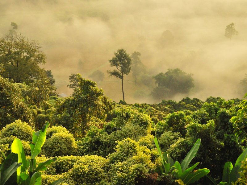 • Forêt pluviale Doi Phu Lang Ka - Phayao, Pha Chang Noi, Thaïlande