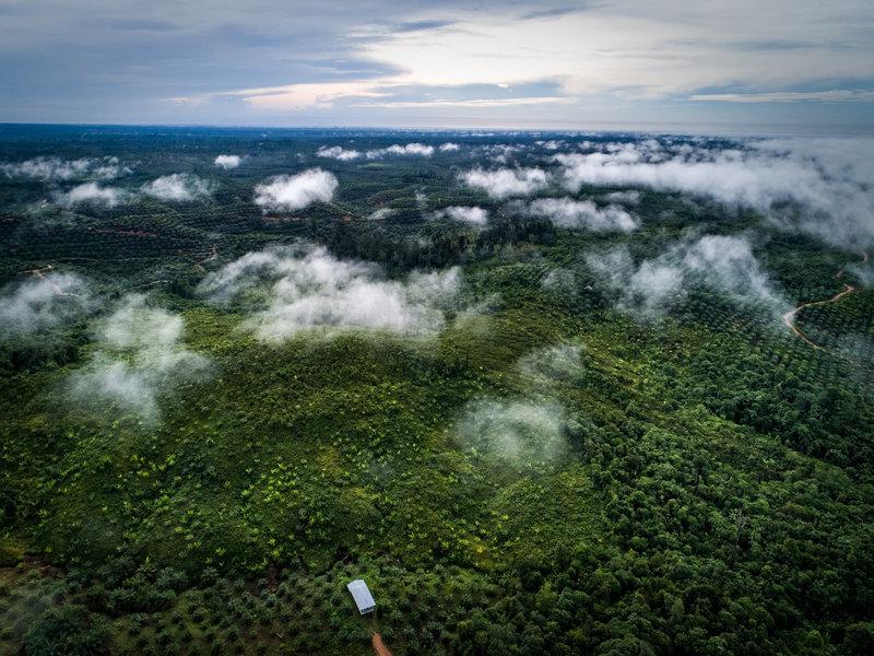 Plantation de palmiers à huile, Indonésie