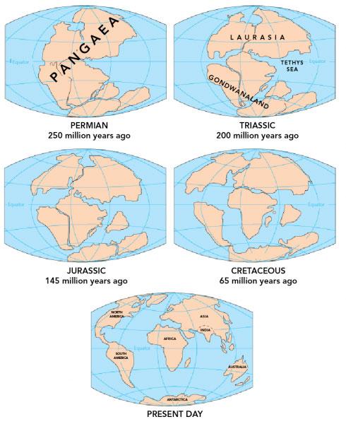 Schema montrant les differents stades d'evolution de nos continents