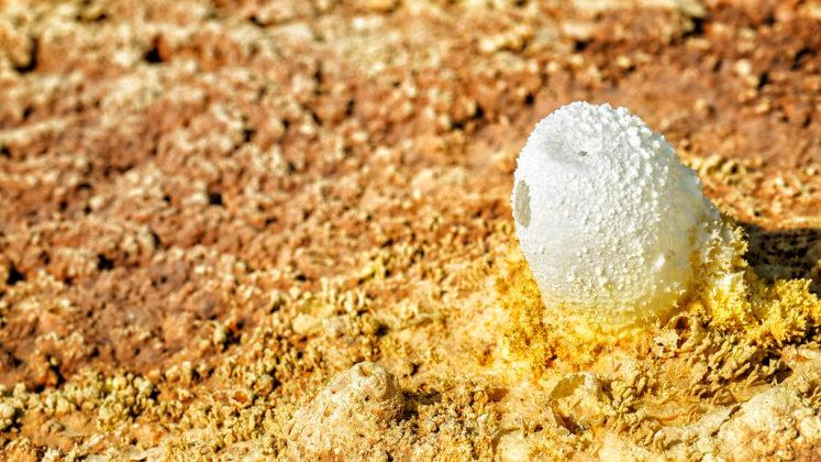 Cristallisation de sel en forme de coquille d'œuf.