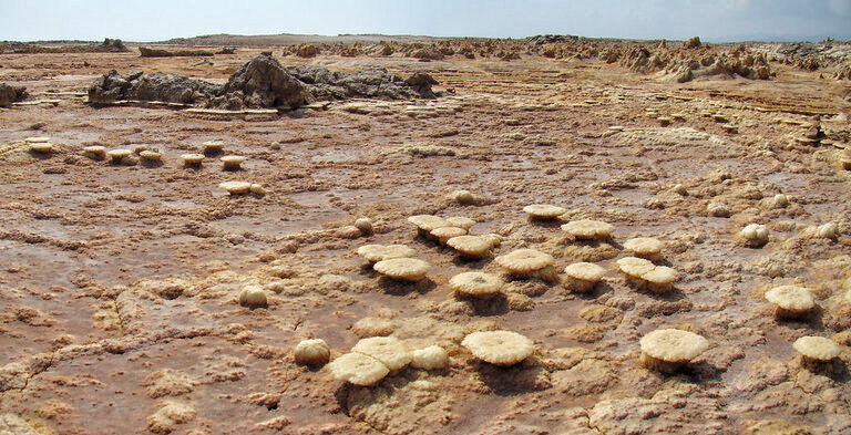 Évaporites (roches salines) en forme de champignons.